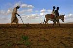 01 African_land_grab